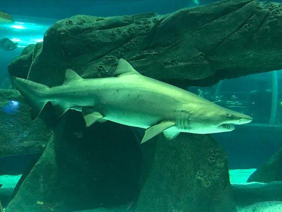 Rio de Janeiro, RJ: Tubarão