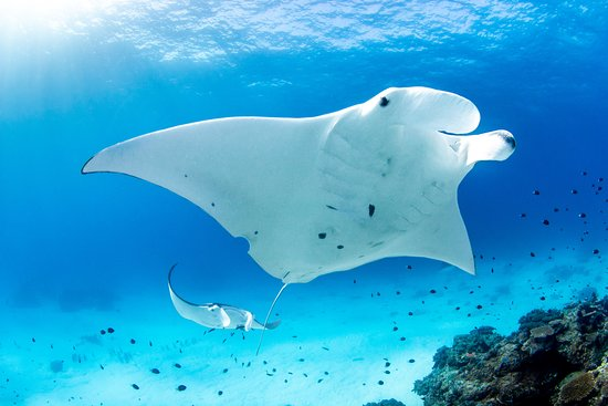 Amazing Scuba Diving Review Of Lady Elliot Island Dive Shop Lady Elliot Island Australia Tripadvisor