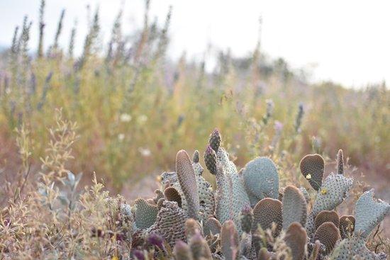 Hidden Valley: cute cactus in desert bloom