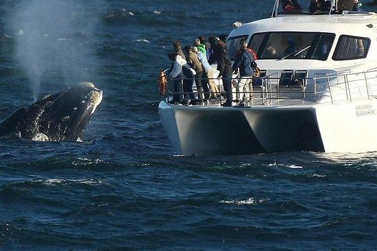 Walvissen spotten vanuit een boot ...