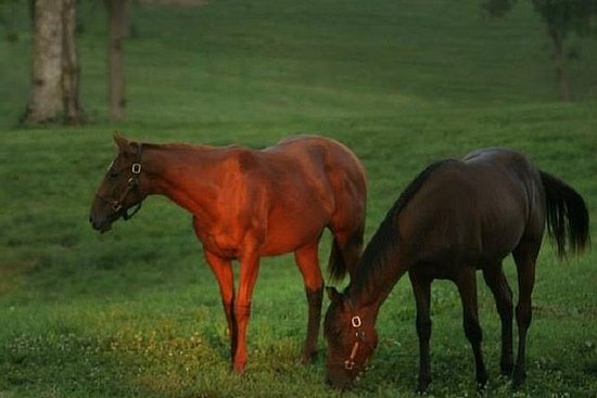 Thoroughbred Horse Farm Tour i...