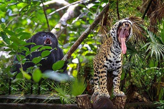 Belize Zoo og Baboon Sanctuary Tour...