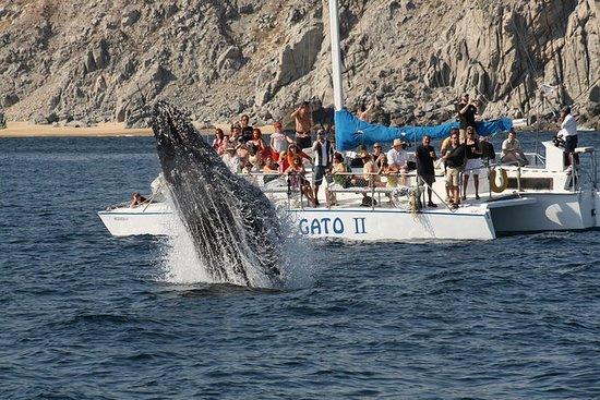 Tour de observação de baleias em Los...