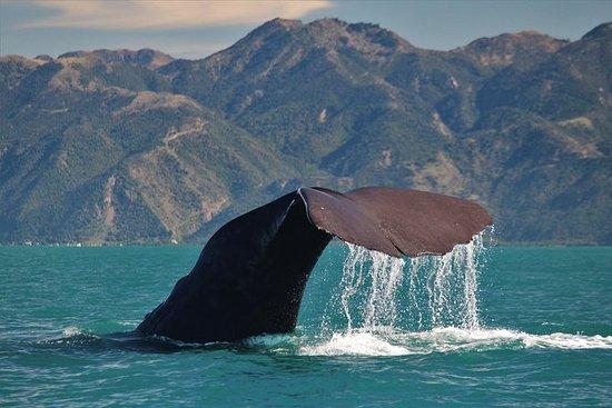 乘船观赏凯库拉的鲸鱼