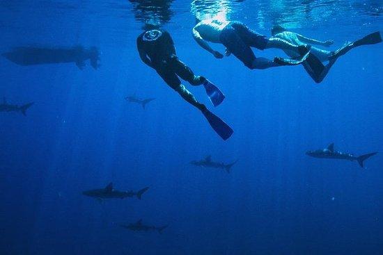 Tour de plongée du requin pélagique