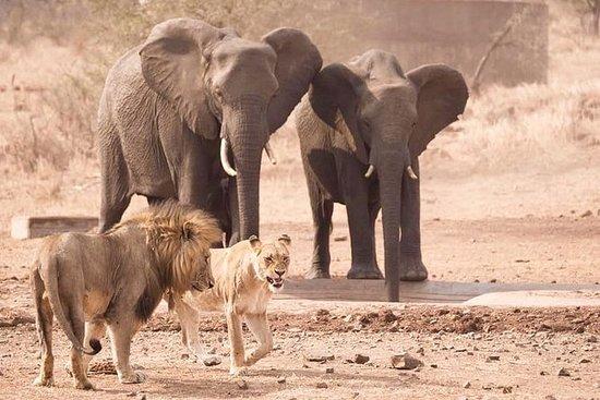 Safari guiado de 3 días en el Parque...