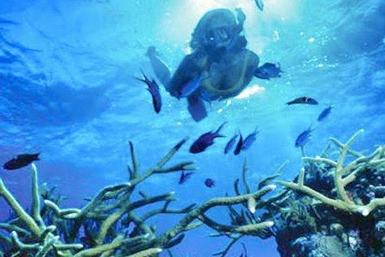 毛里求斯南部之旅包括蓝湾玻璃底船和浮潜