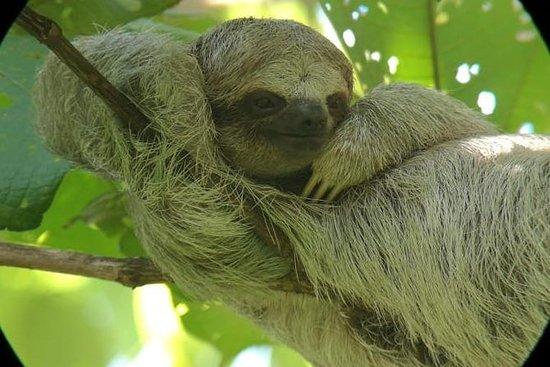 Sloths observation plus...