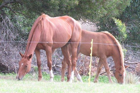 Ride the Pampas: a horse experience - Cabalga las Pampas: experiencia...
