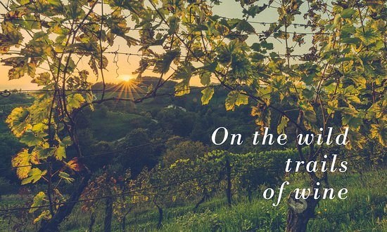 Irpinia Wine Trails