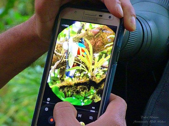 Monteverde Wild Hikes Bird Watching Expedition! Monteverde, Puntarenas, Costa Rica