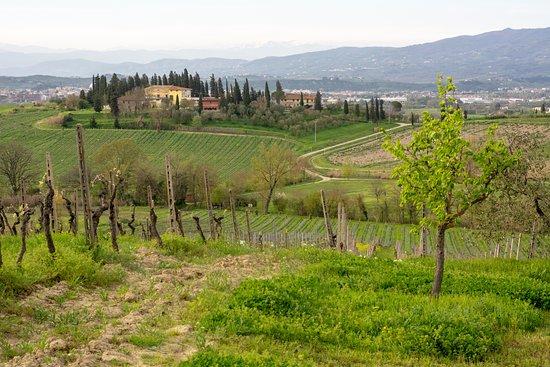 אמפולי, איטליה: Vigne 
