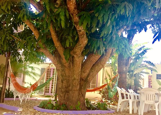 Pousada Luz Divina: Optional outdoor dining in the shade of fruit trees, resting all afternoon in the hammock garden near your room
