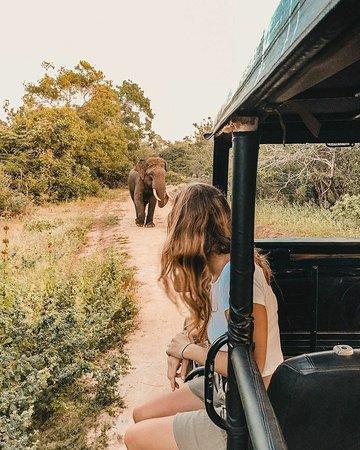 Book safari tour -yala national park
