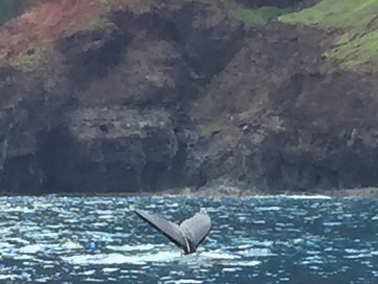Humpback whale beside the boat!
