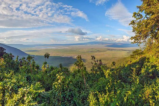 The Ngorongoro Conservation Area spans vast expanses of highland plains, savanna, savanna woodlands and forests. Established in 1959 as a multiple land use area, with wildlife coexisting with semi-nomadic Maasai pastoralists practicing traditional livestock grazing, it includes the spectacular Ngorongoro Crater, the world's largest caldera.