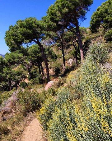 Teia, Spagna: El bosque mediterráneo en plena primavera siguiendo la ruta circular del Vedat en la Serralada Litoral de Teià.