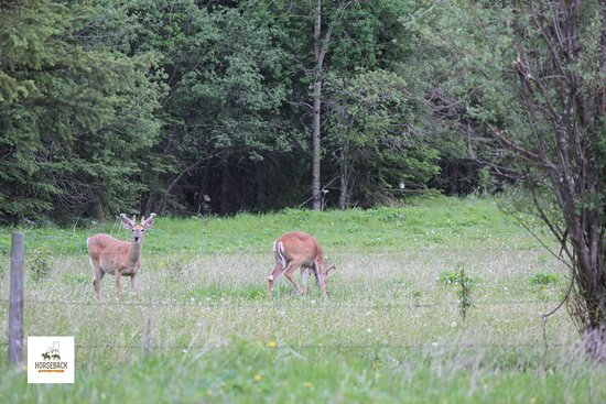 Brule, Canada: Wildlife viewing