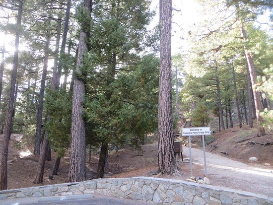 Landscape - Picture of Showers Point Group Campground, Mount Lemmon - Tripadvisor