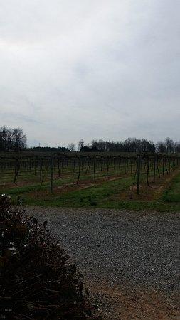 תמונה מWoodMill Winery