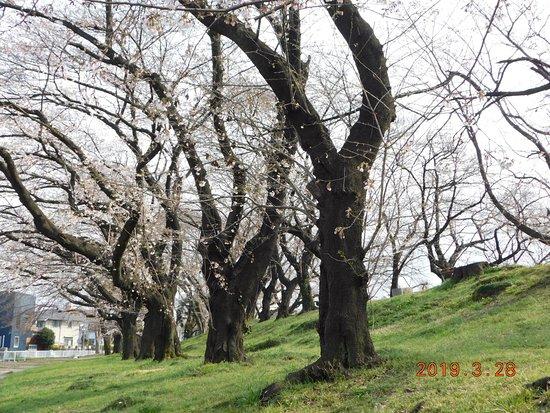 Mampei Park