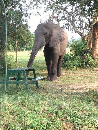 Fantastic base for safari