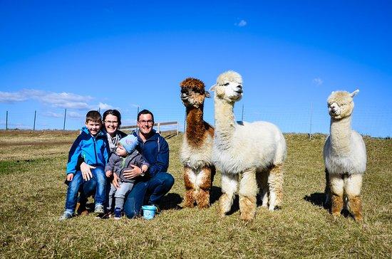 Zwettl, ออสเตรีย: Familie Hahn mit Paddy, Lero und Roberto
