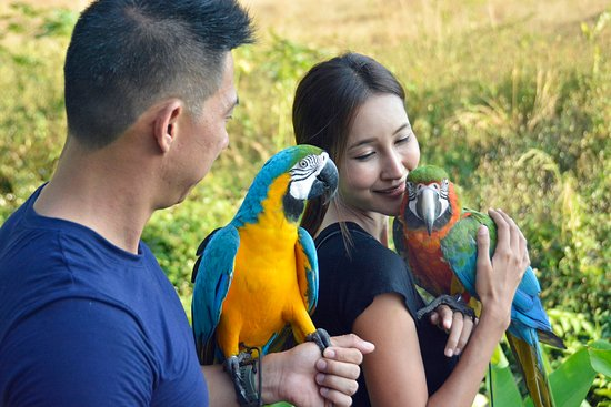 2 of the beautiful parrots and their owners