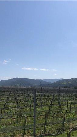Small-Group Santa Barbara Wine Tour to Private Locations: so pretty!