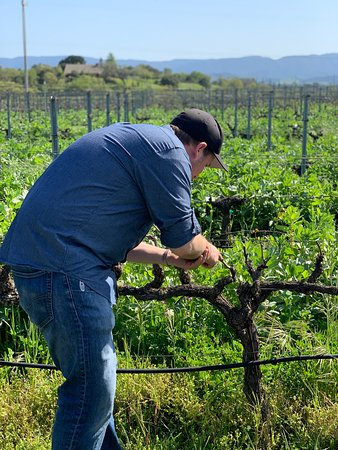 Small-Group Santa Barbara Wine Tour to Private Locations: Learning about early season budding & bio-dynamic farming!