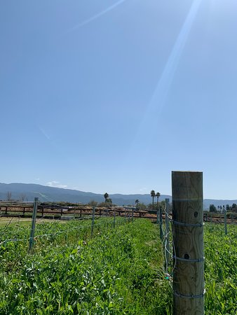 Small-Group Santa Barbara Wine Tour to Private Locations: gorgeous views all day!!