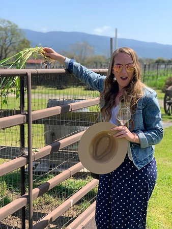 Small-Group Santa Barbara Wine Tour to Private Locations: Feeding the goats sweet peas on the vineyard!