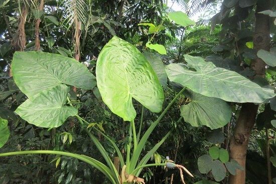 Botanical Garden and the Greenhouses: Plante i Tropehuset