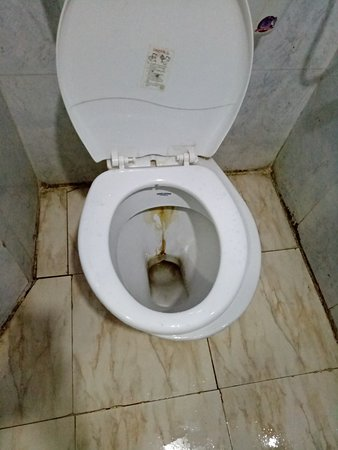 The nightmarish filthy toilet
