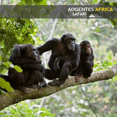 Adgentes africa safari
