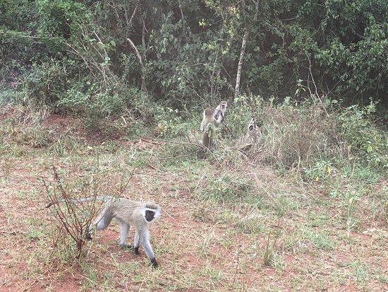 Akagera National Park, Rwanda: アケゲラ国立公園