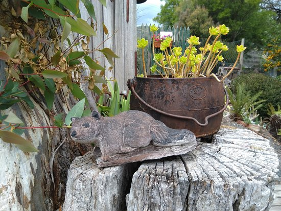 Westerway, Australia: The Possum Shed has lots of lovely items to add to their relaxing ambience.  I liked this possum.