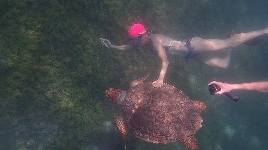 Great snorkle trip to Mexico Rocks