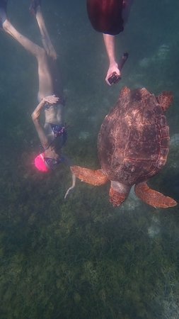 Suzanne diving with turtle