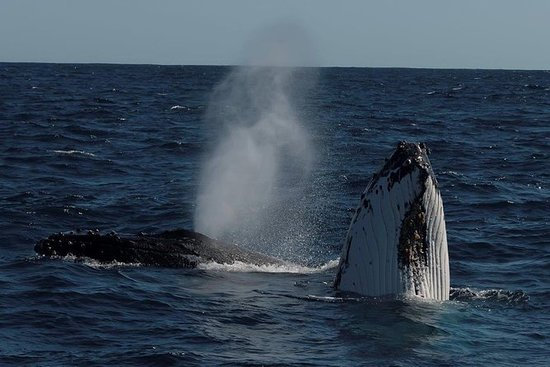 Perth Whale-Watching Cruise from...