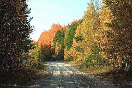 Kolpashevo, Rusia: Осенняя тайга