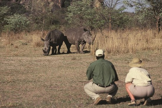 比勒陀利亚为期14天的南非魔术小型野生动物园