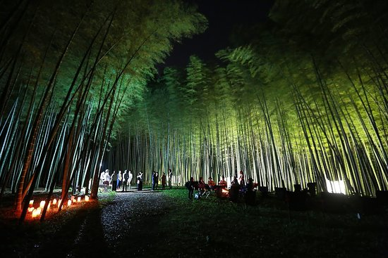 Four Seasons Bamboo Forest Wakayama Farm: 夜のライトアップ。2019年4月1日から6月30日まで日没から夜9時まで開園(最終入場は夜8時半です)。7月からは週末のみの開催です。