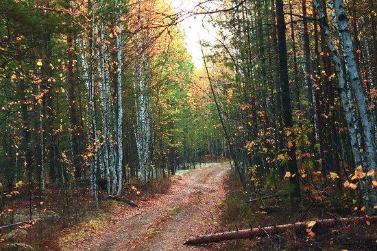Kolpashevo, รัสเซีย: Дорога в тайге