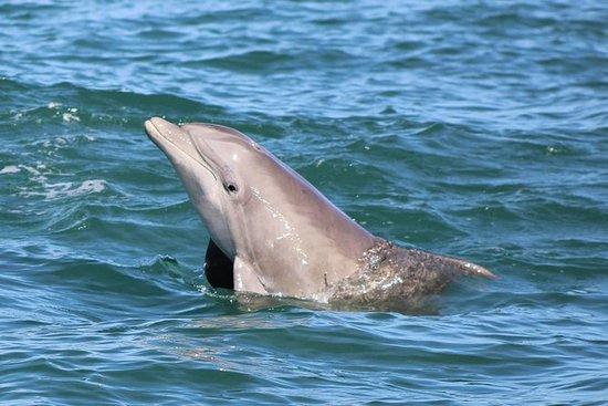海豚和野生动物探险