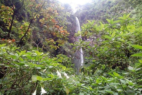Kilimanjaro Bos Mambori watervallen ...