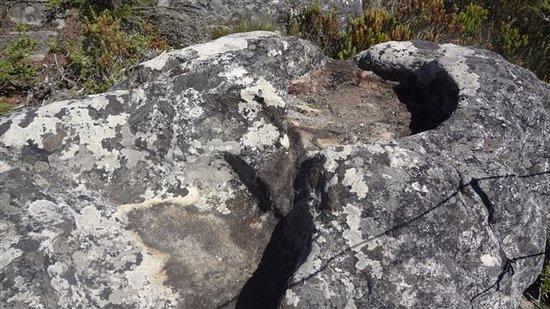 Table Mountain: A natural bird bath