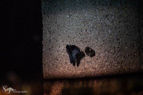 免排隊:蒂爾加滕美泉宮門票照片