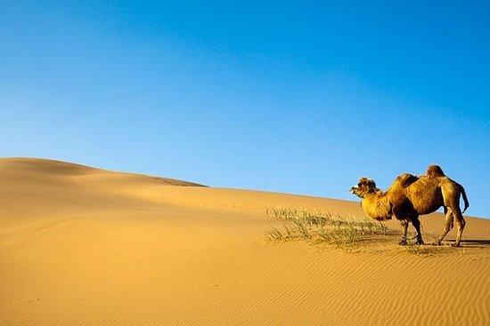 Tour pelo Deserto de Gobi - 9 Dias