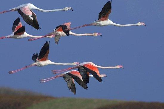 Flamingo Route